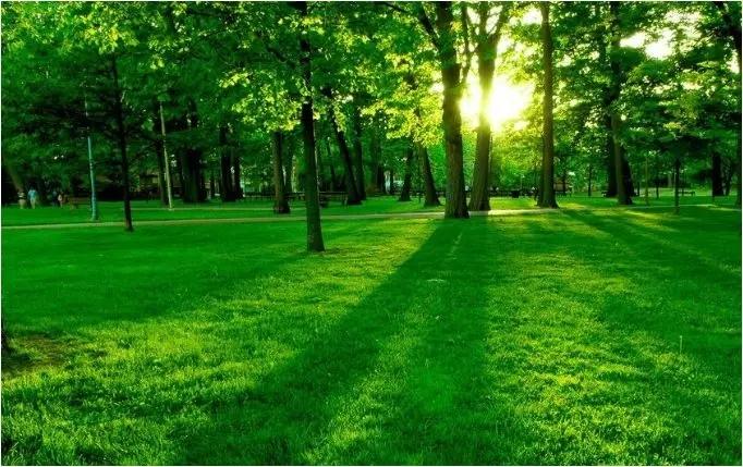 3.12植树节,环保从你我做起!